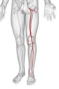 вены в ногах