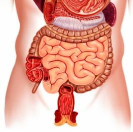 Кандидоз симптомы кишечника