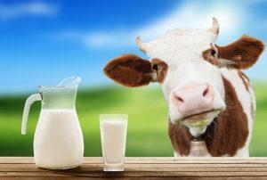 корова и кувшин молока
